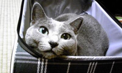 111013_スーツケース猫2.JPG